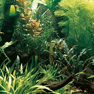 Picture for category hnojiva na rostliny