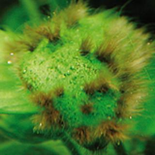 Obrázok pre kategóriu přípravky proti řasám