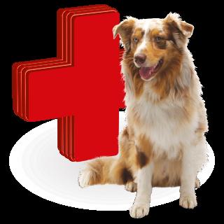 Obrázok pre kategóriu vitamíny a léčiva pro psy