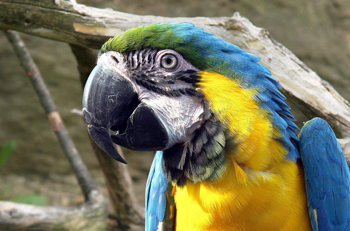 Obrázok pre kategóriu Ptáci